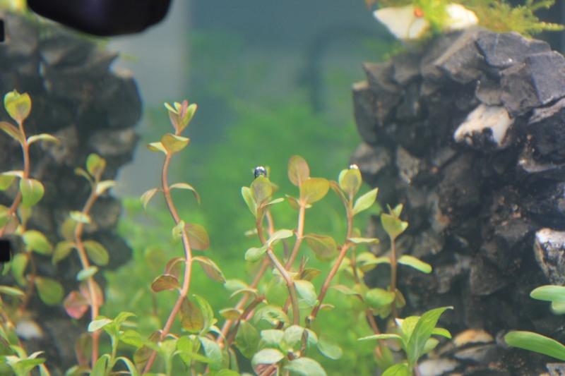 [54L] Création de mon premier bac | Etape 2: Choix des plantes et du décors - Page 2 6_zoom13