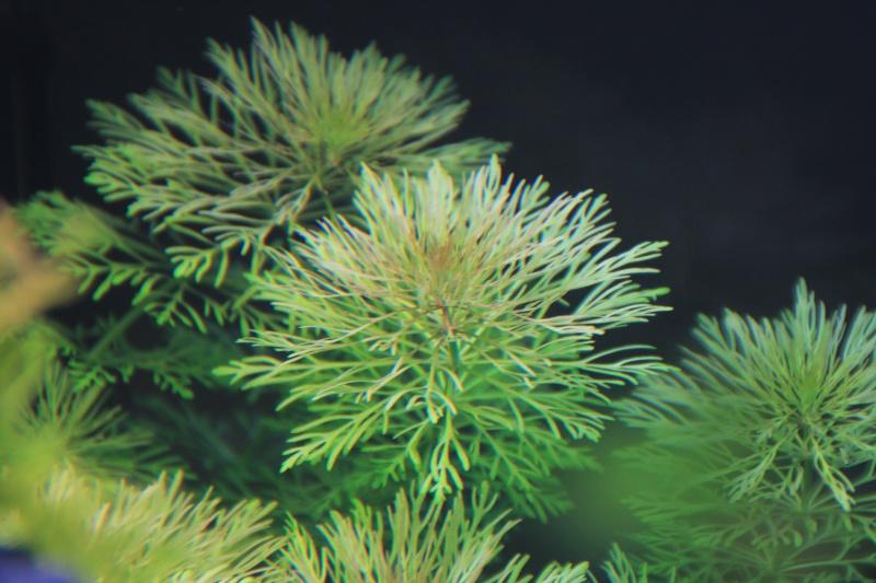 [54L] Création de mon premier bac | Etape 2: Choix des plantes et du décors - Page 2 Img_1312
