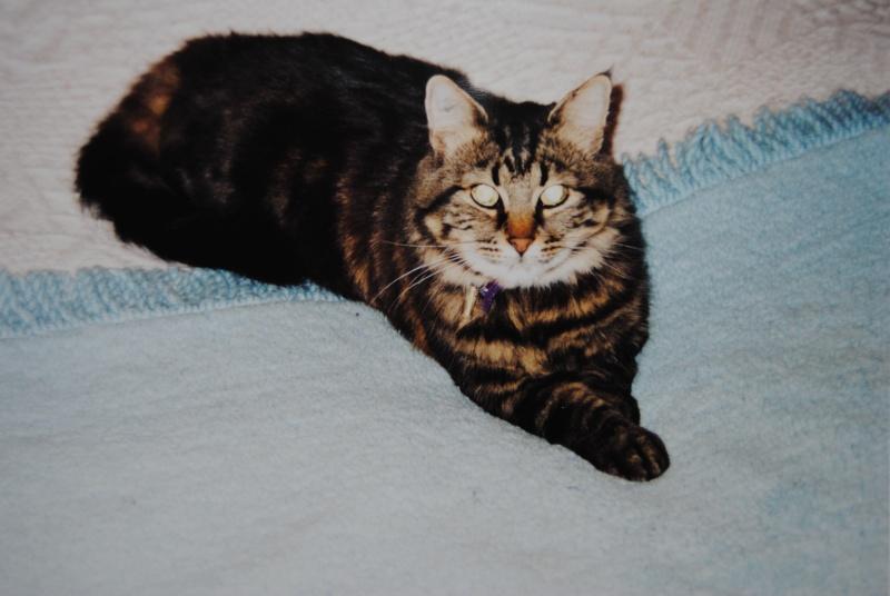 Mamie chat de 15 ans : besoin d'un accueil en URGENCE Dsc_0110