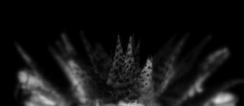 Aloe descoingsii x hawortioides 10266810