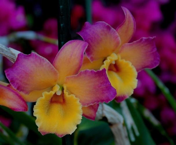 Concours: Les plantes nous en font voir de toutes les couleurs. Participations (photo normale) D_nobi10