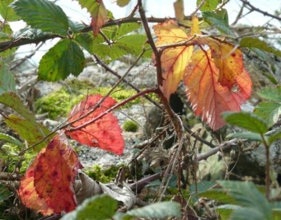 Concours: Les plantes nous en font voir de toutes les couleurs. Participations (photo normale) Feuill11