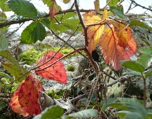 Concours: Les plantes nous en font voir de toutes les couleurs. Participations (photo normale) Feuill12