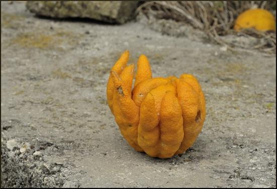 Concours: 'Fais moi peur Orange13