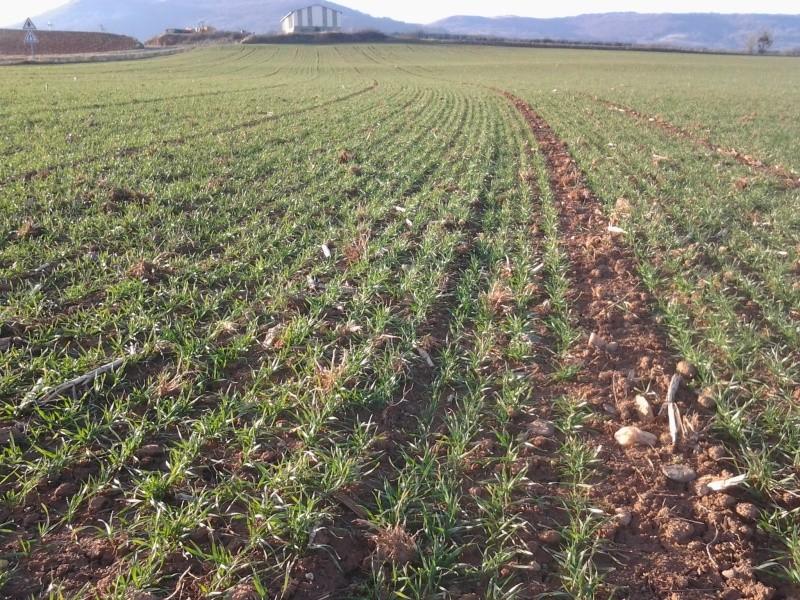 semis de blé 2013-2014 - Page 20 Photo047