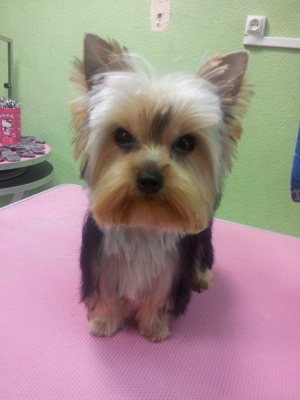 photos de chiens nés LOF et non confirmable 20130111