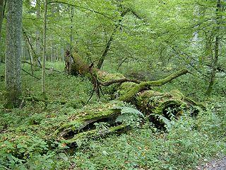 Au secours des forêts primaires 320px-10