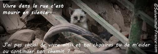 Appel à l'aide et soutien aux animaux Au_for10