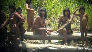 Au secours des forêts primaires Images13