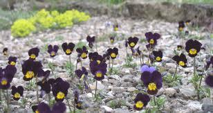 Arroser les fleurs plutôt que les mauvaises herbes Images27