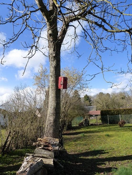 Se ressourcer auprès des arbres Noyer10