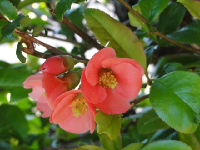 Le printemps  dans mon jardin Cognas11