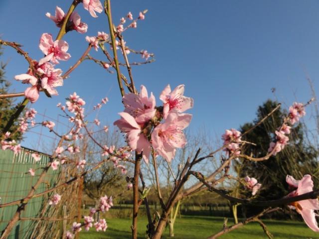 Le printemps  dans mon jardin Fleurs10