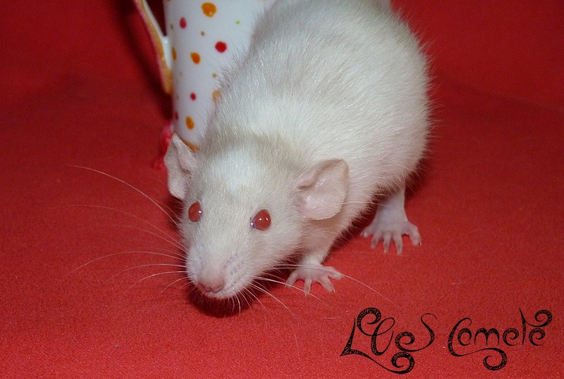 URGENT Les deux ratounes les plus parfaites du monde ! P1520225