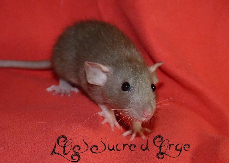 URGENT Les deux ratounes les plus parfaites du monde ! P1520316