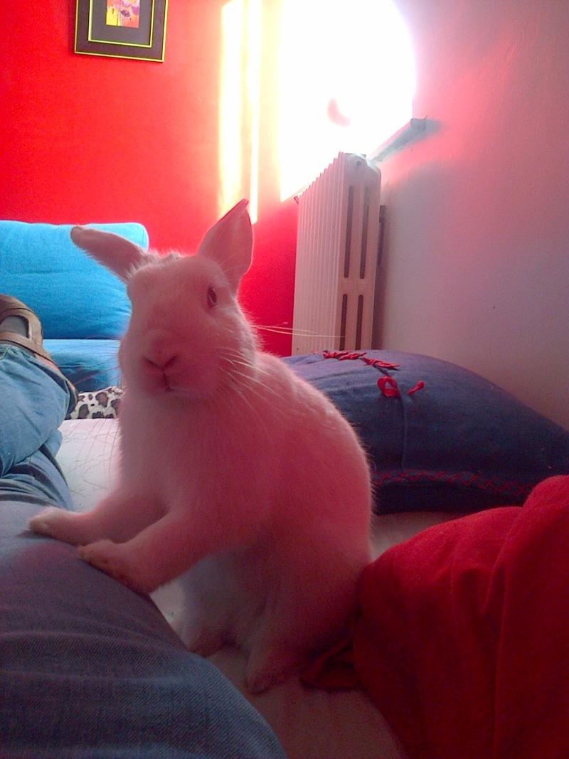 Wapi, mâle albinos né en juin 2013 (estimation) - Page 2 Img-2070