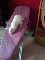 Wapi, mâle albinos né en juin 2013 (estimation) - Page 2 Img-2097