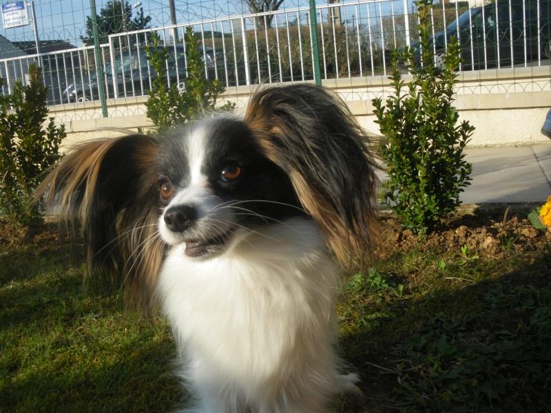 photos de chiens nés LOF et non confirmable Evi_ma13
