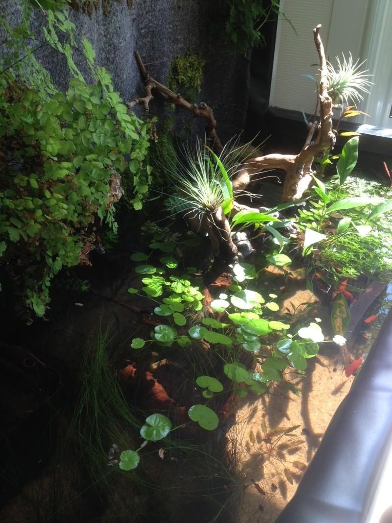 Mur végétal de Nico Aqua12