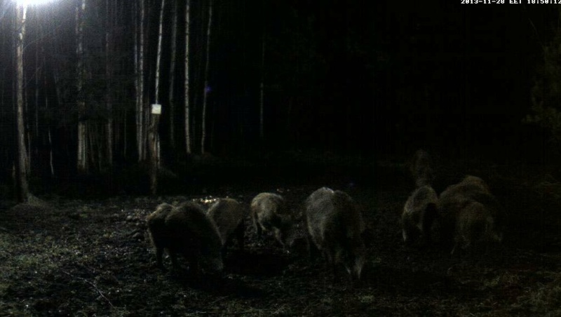Boars Cam, Winter 2013 - 2014 2013-122
