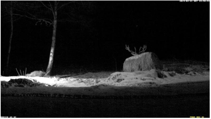Red Deer Cam (Saarema Island)  2014-051