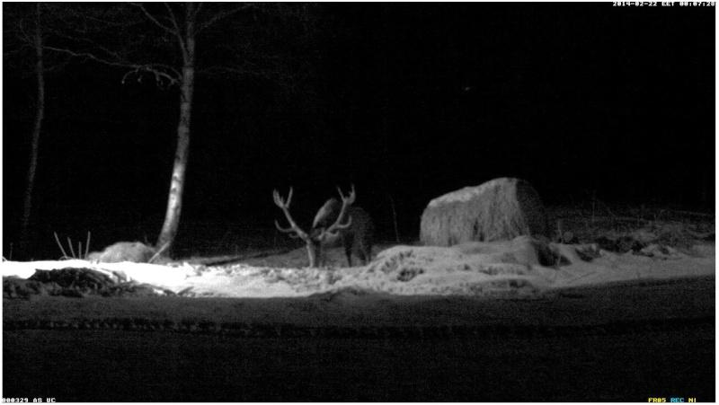 Red Deer Cam (Saarema Island)  2014-053