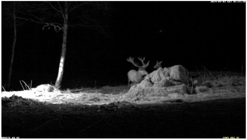 Red Deer Cam (Saarema Island)  - Page 2 2014-067