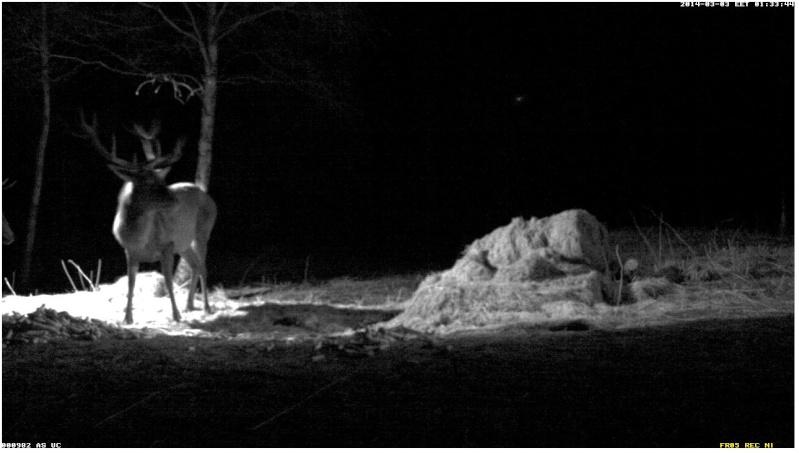 Red Deer Cam (Saarema Island)  - Page 2 2014-068