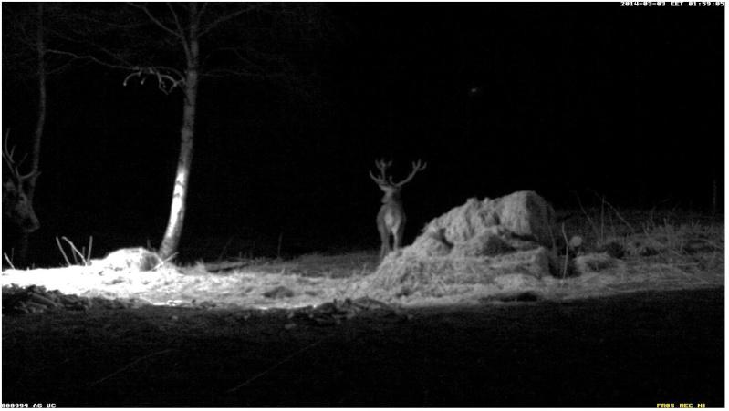 Red Deer Cam (Saarema Island)  - Page 2 2014-069
