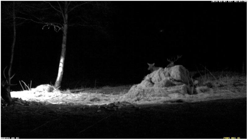 Red Deer Cam (Saarema Island)  - Page 2 2014-070