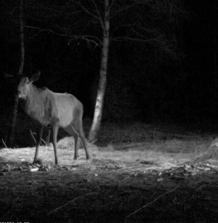 Red Deer Cam (Saarema Island)  - Page 4 2014-082