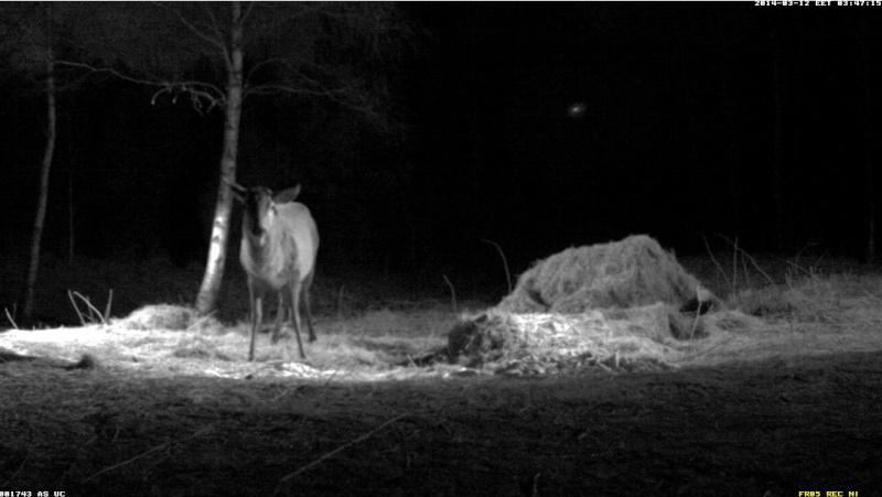 Red Deer Cam (Saarema Island)  - Page 5 2014-090