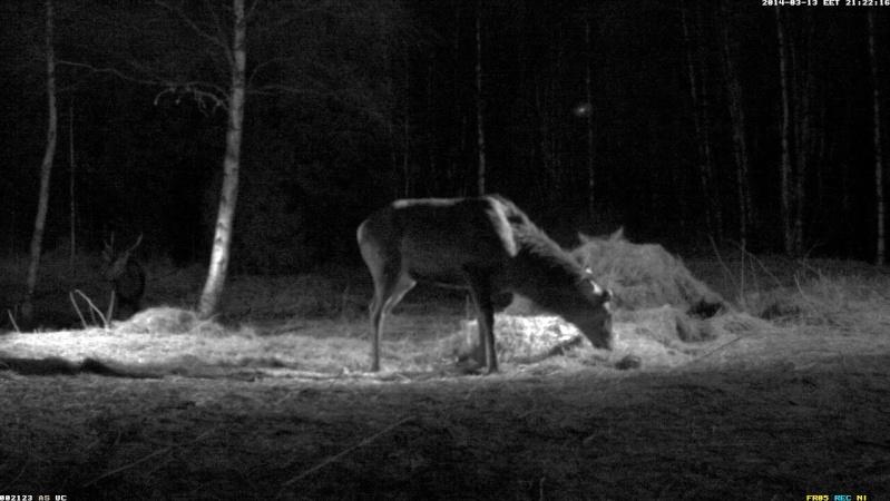 Red Deer Cam (Saarema Island)  - Page 5 2014-094