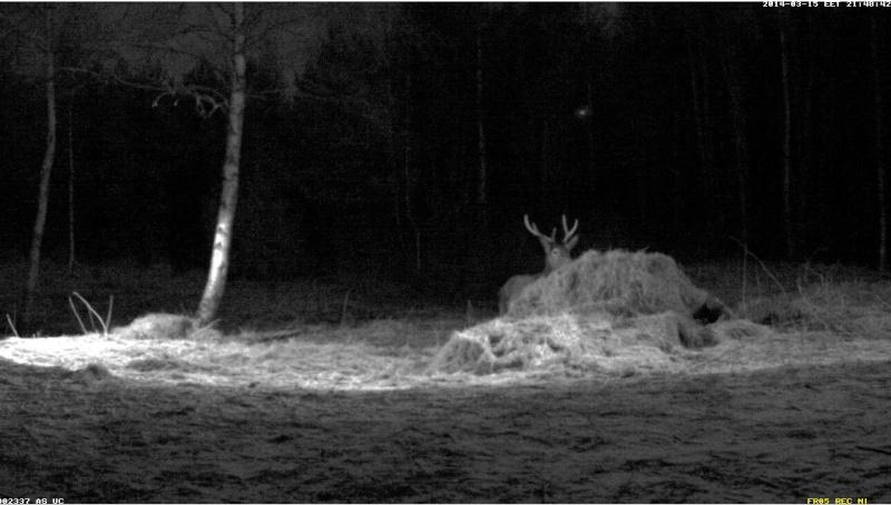 Red Deer Cam (Saarema Island)  - Page 6 2014-097