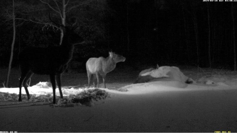 Red Deer Cam (Saarema Island)  - Page 6 2014-105