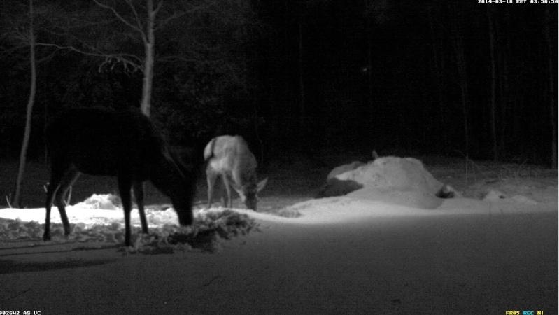 Red Deer Cam (Saarema Island)  - Page 6 2014-106