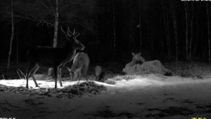 Red Deer Cam (Saarema Island)  - Page 6 2014-107