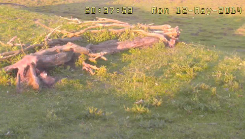 Fox Cam in the Netherlands 2014-200