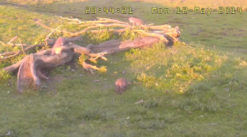 Fox Cam in the Netherlands 2014-202