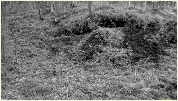 Badger Castle  (Saaremaa Island) 2014-208