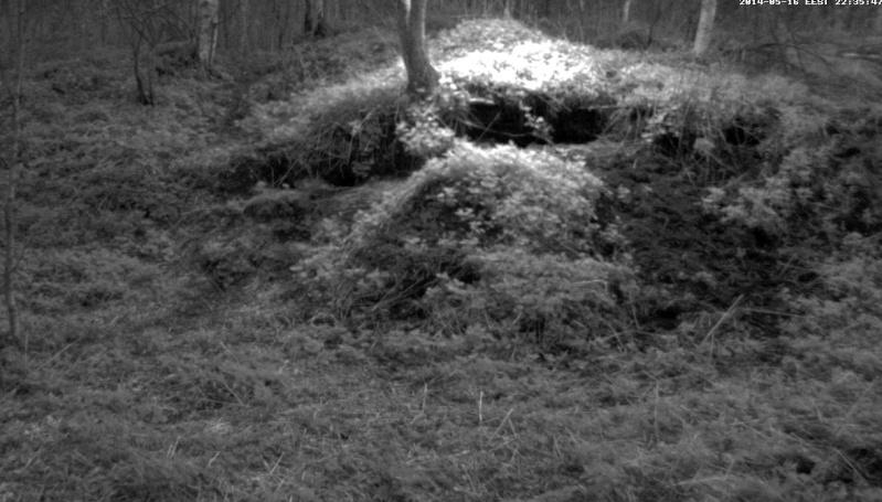 Badger Castle  (Saaremaa Island) 2014-210