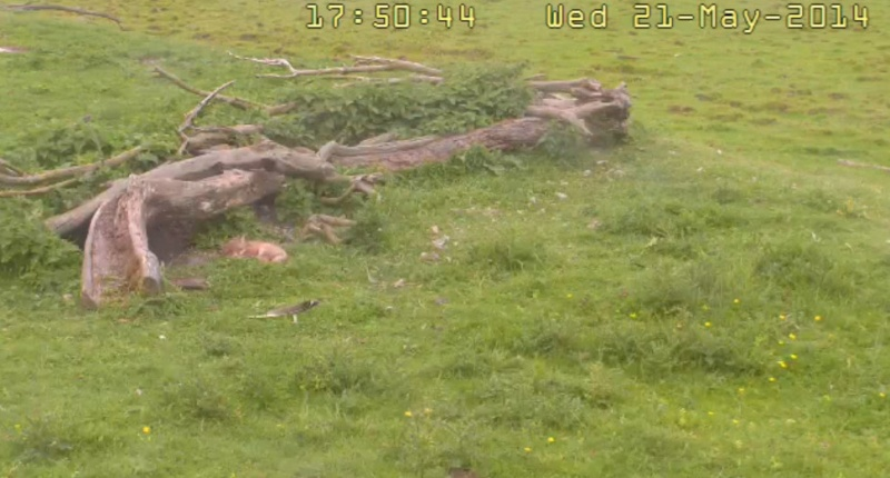 Fox Cam in the Netherlands - Page 2 2014-213