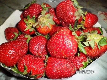 la culture du fraisier - Page 7 Sam_3414