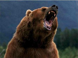 L'OURS 3324b110