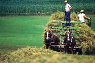 PEUPLES/ETHNIES/COMMUNAUTES Amish-10