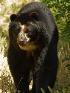 L'OURS L-ours10