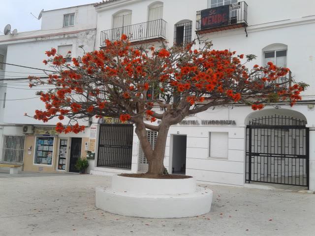 Identification de cet arbre 20120410