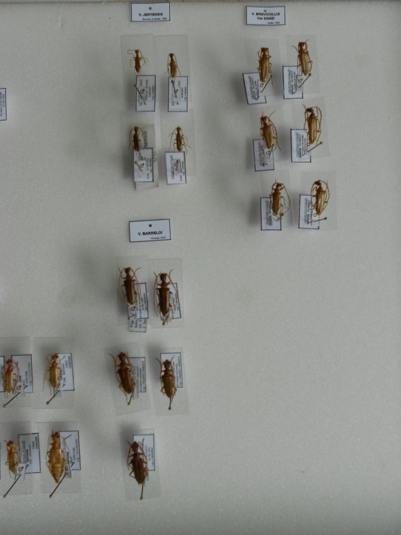 Présentation des collections Entomologiques - Page 7 Dscn0014