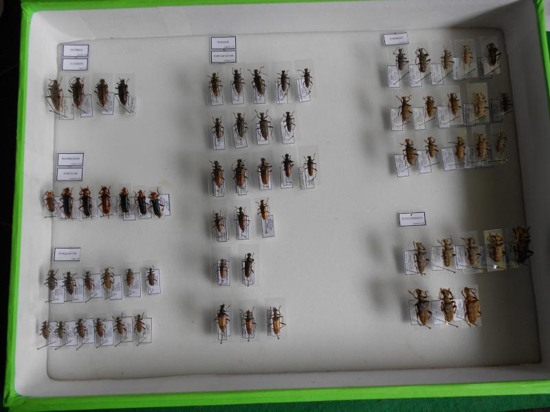 Présentation des collections Entomologiques - Page 7 Dscn0015