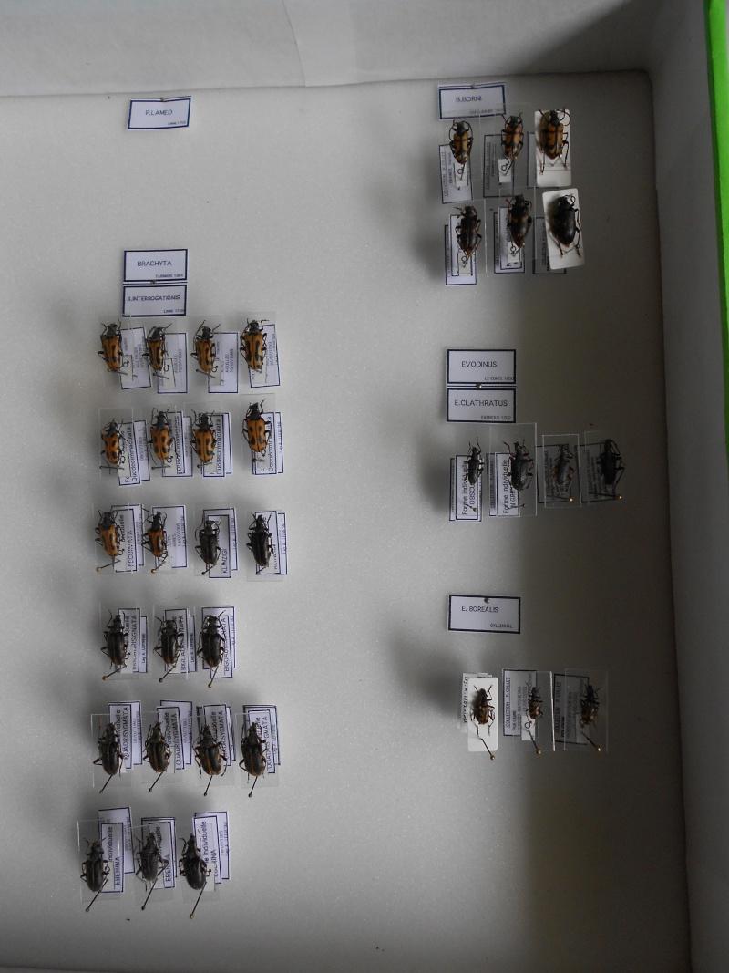 Présentation des collections Entomologiques - Page 7 Dscn0017